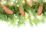 Pine Branch With Cones Stock Image