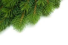 Pine branch in the corner Stock Photos