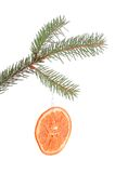 Pine branch with dried orange slice isolated Stock Image