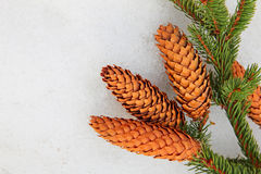 Pine branch and fir cone on white snow. Stock Photography