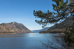 Pine branch in foreground, mountain lake shore. Royalty Free Stock Images