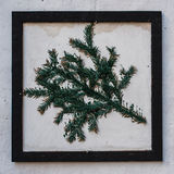 Pine branch on the frame. White wall background royalty free stock image