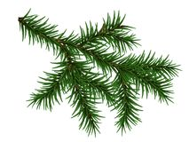Pine Branch Isolated On White Background. Vector Illustration Royalty Free Stock Photos