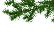 Pine Branch Isolated On White Background. Vector Illustration Royalty Free Stock Photo