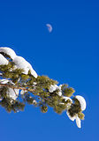 Pine branch and moon against blue sky Stock Photo