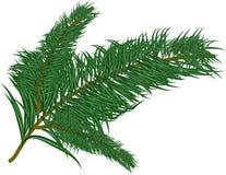 Pine branch over white Stock Photo