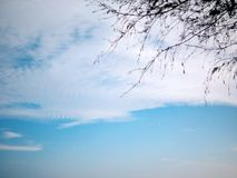 Pine branch part and clouds on the blue sky. Background with copy space tree plant nature natural season environment evergreen park view travel beautiful scene royalty free stock photo