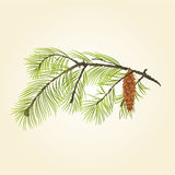 Pine branch with pine  cone vector Stock Images