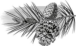 Pine branch with pine cones. Pine branch with pine cores with leaves on sky background vector illustration