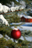 Pine branch and red ball. Red Christmas ball hanging on pine branch Stock Image