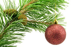 Pine branch with red bauble Stock Image
