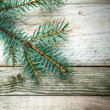 Pine branch on rustic wood Stock Images