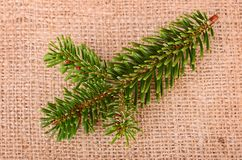 Pine branch on sackcloth Royalty Free Stock Photo