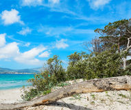 Pine branch by the sea Stock Photography