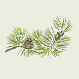 Pine branch with snow and pine cone christmas theme vector Stock Image