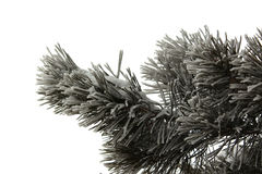 Pine branch in snow Royalty Free Stock Photo