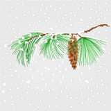 Pine branch with snowflakes christmas theme vector Royalty Free Stock Image