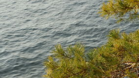 Pine branch sways in the wind against blue Lake Como surface. Pine branch sways in the wind against blue Lake Como surface, Italy stock video footage