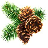 Pine branch with three brown cones, Christmas decoration, New Year composition, decor element, isolated, hand drawn. Watercolor illustration on white background stock photo