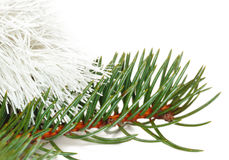 Pine branch and white tinsel Stock Images