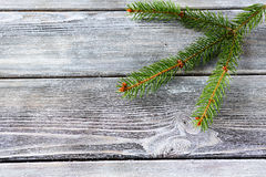 Pine branch on a wooden background Stock Images