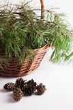Pine branches in the basket and pine cones Stock Images