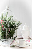 Pine Branches Birdcage. Birdcage filled with pine branches and candy canes for the holiday season Royalty Free Stock Photography