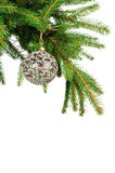 Pine branches and christmas ball. Isolated on white background Stock Photo