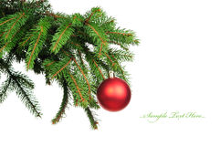 Pine branches and christmas decoration Stock Image