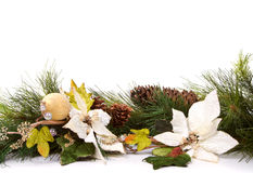 Pine branches and christmas flowers royalty free stock photo