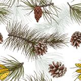 Pine branches colored seamless pattern. Colored pine fir branches and cones forest wood seamless pattern vector illustration Stock Photo