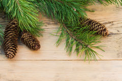 Pine branches with cones on a background of light wood Royalty Free Stock Images