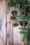 Pine branches,cones. Stock Image