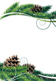 Pine branches and cones Stock Photo