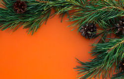 Pine branches with cones on an orange background Stock Photography