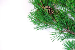 Pine branches with cones on a white background Stock Photos
