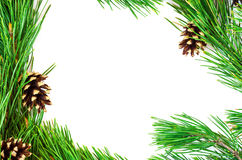 Pine branches with cones on a white background Stock Photo