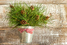 Pine branches with cones in zinc bucket close-up Royalty Free Stock Images