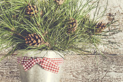 Pine branches with cones in zinc bucket close-up Royalty Free Stock Photos