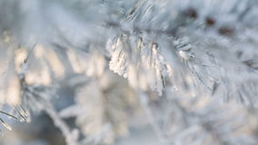 Pine branches covered with hoar frost shoot in RAW. Focus pull stock video footage
