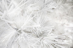 Pine branches covered rime frosty Royalty Free Stock Photography