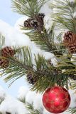 Pine Branches, Cristmas Ornament, Snow Stock Photo