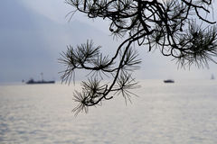 The pine branches on the edge of Lakes. Stock Photo