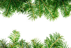 Pine branches frame Stock Photo