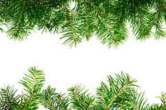 Pine branches frame Stock Image
