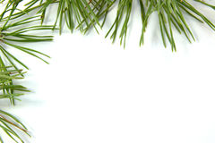 Pine branches. Frame the white background frame Stock Image