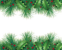 Pine branches with holly Royalty Free Stock Images