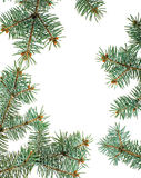 Pine branches isolated christmas background Royalty Free Stock Photo