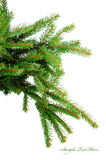 Pine branches isolated on white Stock Photos