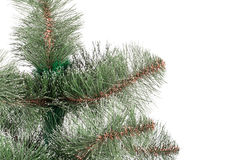 Pine branches Royalty Free Stock Photo